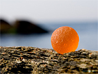 Sea Glass Photography - Orange Sea Glass Marble Title #1