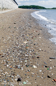 Can You Take Sea Glass From Spectacle Island